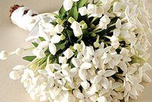 Flores #Flower