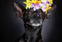 Beautiful Black Dogs / Adoption Awareness