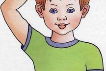 Testünk részei / Forrás: Работа с деца със СОП