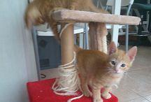 pollock & klee / Mis gatos