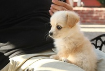 Super Cuteness / Everything adorable to make your heart glow.  Awwwww. / by Atha Ember
