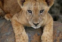 SAFARI avec Destination sur Mesure travel / Le Spécialiste des Safaris partez à la découverte d'une faune et d'une flore sauvage avec www.destinationsurmesure.com