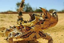 lizards&Chameleons