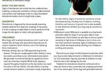 Animal health / by Elizabeth Druin