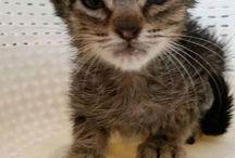 Gatos en adopción / Aquí puedes encontrar gatos en adopción y contactar con sus rescatadores si quieres adoptar alguno.