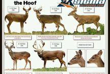 Hunting Signs / Hunting signs/sayings that pertains to hunting, etc.
