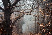 widoki jesien