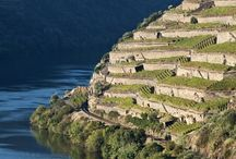 Discover Douro / Discover the beauty of the Douro Valley