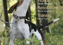 Tips For Family Dogs / Have a family dog? This is the perfect board for you. Tons of articles with helpful tips and information on how to be the perfect pup parent.