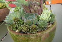 Cacti and fantastic gardens
