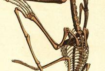Bilder aus dem Themenbereich Paläontologie / Fotos, Zeichnungen und Gemälde aus dem Themenbereich Paläontologie