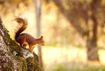 ANIMAL ● SQUIRREL