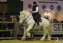 Salon International de l'Agriculture de Paris 2016 / Salon coté équin avec les 9 races de chevaux de trait français