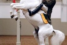 Equitation Traditionnelle