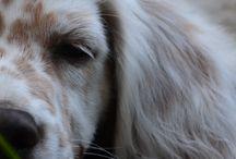Puppy Love / by Gillian Mackey
