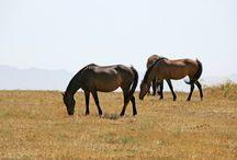Horse Riding Greece / Our horse riding adventurous
