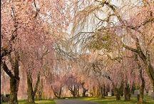 Latur Trees