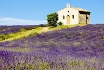 Frankrijk Provence