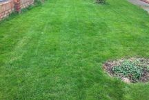 Lawns / Turning customers lawns into truly beautiful lawns