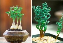 Fantastic plants