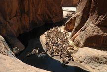 Grande traversée de l'Ennedi / Envie de grands espaces ? ... Besoin de vous régénérer ?... Venez parcourir l'un des plus beaux massifs du Sahara : L'Ennedi en Rando chamelière ! http://www.point-voyages.com/fr/product/point-voyages-tchad-grande-traversee-de-l-ennedi-526.html