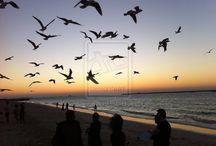 Birds on the Horizon