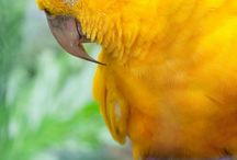 YELLOW / by Robyn Jacobia