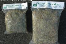 Garden Mosses / Moss is used for adding decorative trim/lining to hanging baskets, hayracks and freestanding planters and containers or a background for floral arrangements. It softens the edges of the coco-fiber liners and controls spillage when watering.