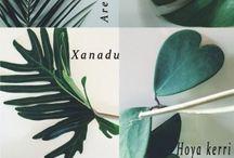 Botanic Jungle Feelings