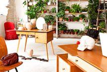 Ev içinde bitki bakımı