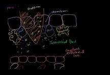 Immune Response I: elements / by Alfredo Corell