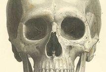 All things Skull