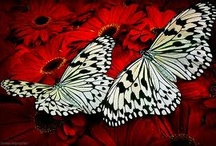 Butterflies and Moths / by Andrea Williams