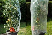 pomidory tunel