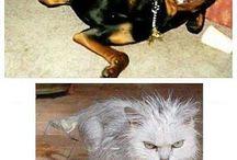 animali divertenti