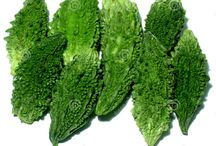 """Buy Fresh Karela Online In Delhi / In This Article, I'll write why we should eat Karela and it's benefits and Some Recipies for Karela. Let's first introduce what is Karela? Karela is widely known as bitter melon, bittebalsa, Goya, In Bangla """"উচ্ছে"""". There are some Great benefits of eating Karela. Read More.. http://www.dwarkamandi.com/blog/buy-fresh-karela-online-in-delhi/ buy fresh vegetables online. http://www.dwarkamandi.com/vegetables"""