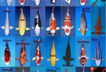 Ryby do jezírka