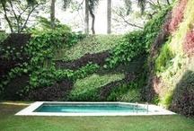 Gabion wall planting