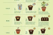 DIY Green Living / Simple and easy ways to start your own vegetable garden at home.