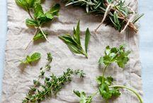 Hierbas aromáticas y especias