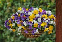 flores/jardim