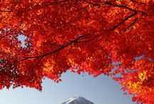 Beautiful Nature / by Makayla May