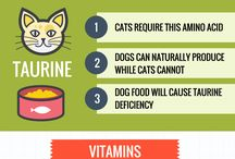 Cool Cat Infographics / Cool Cat Infographics that point to articles that answer your cat questions.
