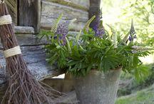 Giardino e decorazione