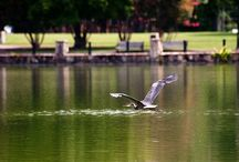!**East Lake Park--Birmingham, Alabama**! / by Mule Wagon