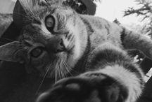MyPhoto