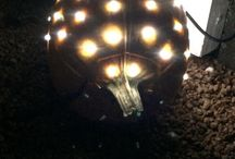 Porcupine / Porcupine inspired by Martha Stewart