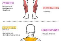 anatomia+gyakorlatok