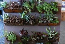 Indoor Garden / by Judy Newman