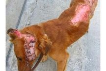 Stop Animal Abuse!!!!! / by Susan Q